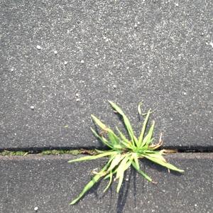 concrete_flower